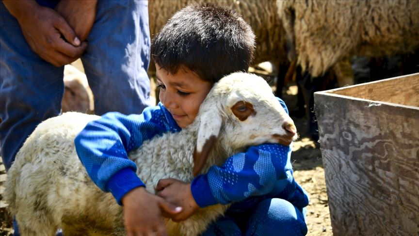 Koyunları telef olan ailenin hüznü sevince döndü...