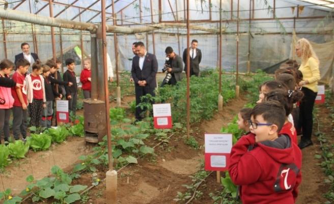 Alanya'da minikler kurdukları serada organik sebze yetiştiriyor...