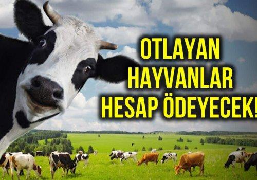 HAYALDİ, AK PARTİ HÜKÜMETİ İLE GERÇEK OLDU...